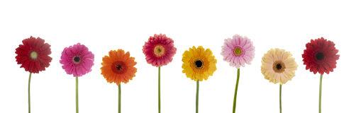 pretty-flowers-28856769